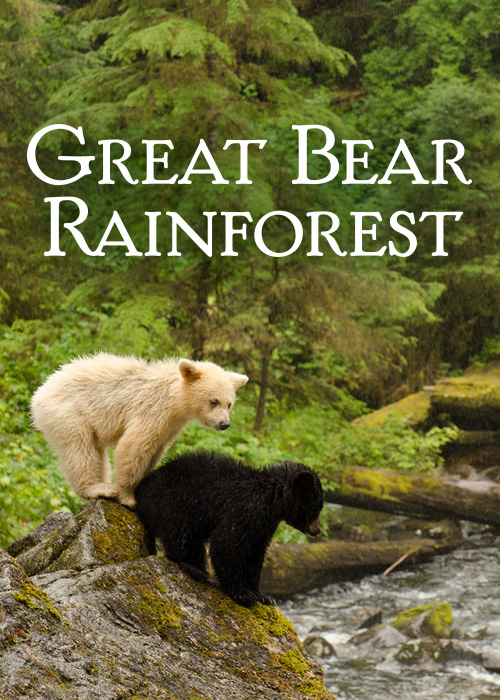Image result for great bear rainforest