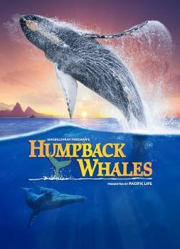 Humpback Whales (3D/2D)