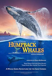 Humpback-Whales-sm