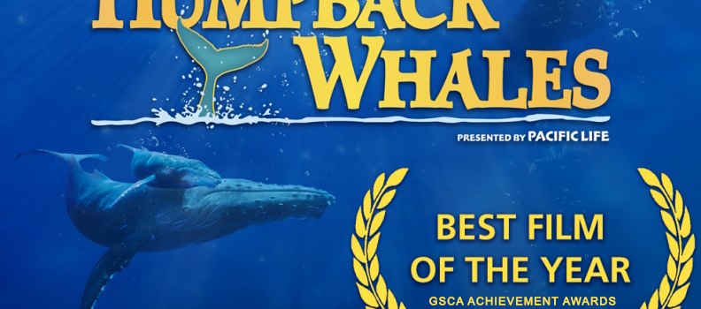 """""""Humpback Whales"""" Wins Best Film of the Year at the GSCA Film Awards"""